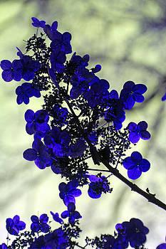 Carolyn Stagger Cokley - purple tardiva