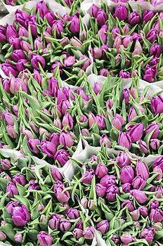 Oscar Gutierrez - Purple Tulip Bouquets