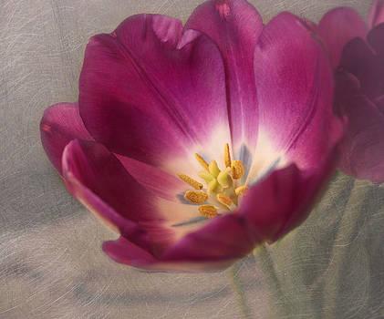 Kim Hojnacki - Purple Tulip