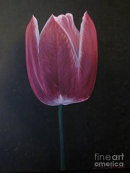 Purple Tulip by Sandra Spincola