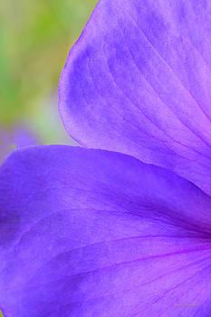 Donna Blackhall - Purple Velvet