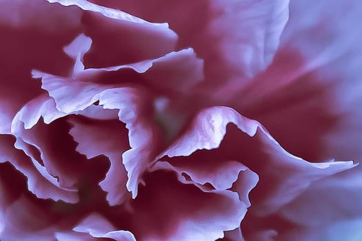 Elvira Pinkhas - Purple Velvet