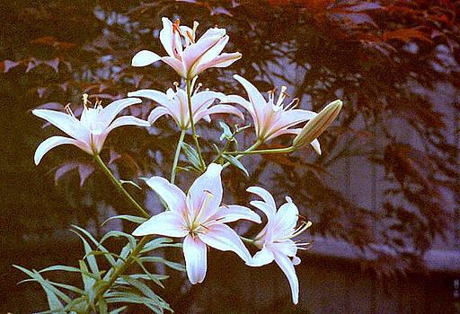 Stephen Proper Gredler - Purple/White lily