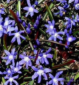 Gail Matthews - Purple Wild Flowers
