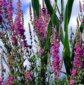 Purple Wildflowers by Kathleen Struckle