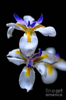 Purple Yellow And White by Bobby Mandal
