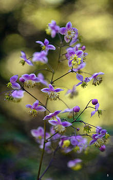 Purple Yellow by Minartesia
