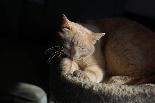Purrfectly content by Linda Storm