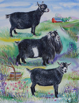 Pygmy Goat National Champions 2013 by Gail Dolphin