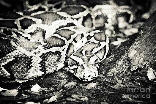 Python by Alan Oliver