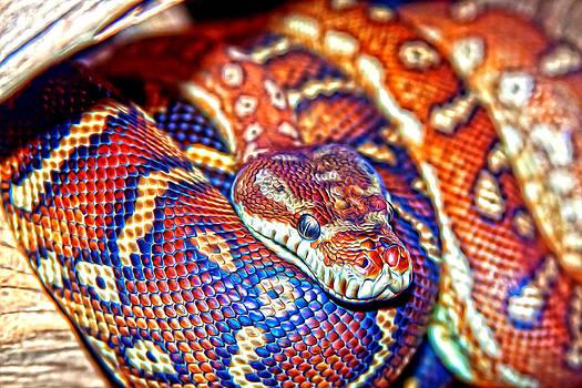 Regina  Williams  - Python