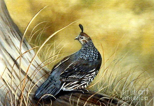 Quail on log by Lynne Parker