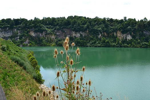 Quarry Lake with Plant by Tim Toomey