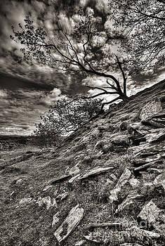 Darren Wilkes - Quarry Tree