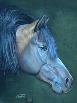 Quarter Horse by Mahto Hogue