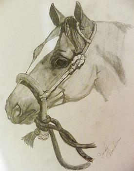 Quarter Horse by Sarah Hardin