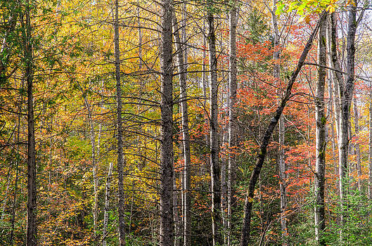 Quebec forest in autumn by Rob Huntley