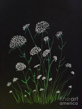 Queen Anns Lace by Ginny Youngblood