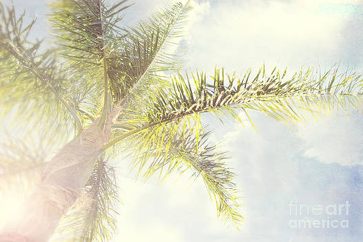 Queen palm by Cindy Garber Iverson