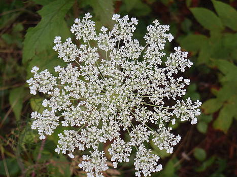 Queen's Lace by Lorrie M Nelson