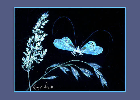 Queen's Lacewing at Night by Karen Nelson