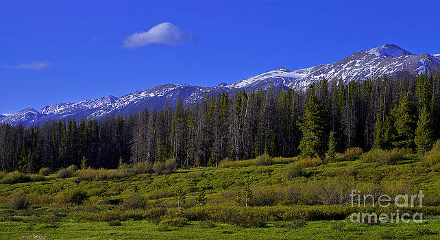 Quick Spring Snow by Barbara Schultheis