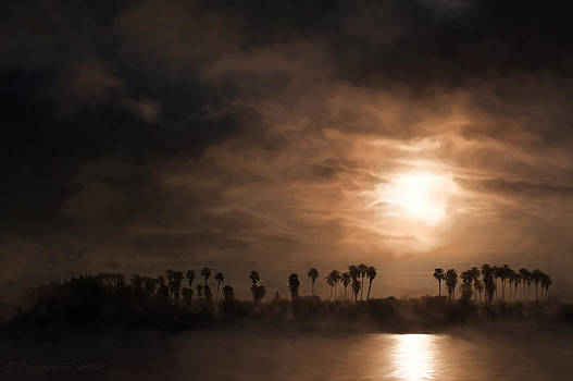 Quiet sunrise with fog and palm trees by Stacey Sather