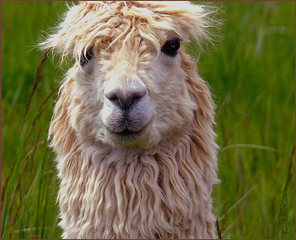 Kae Cheatham - Quirky Llama