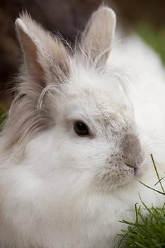 Rabbit by Gillian Dernie