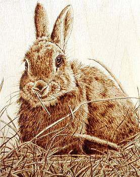 Rabbit in the Hay by Cara Jordan