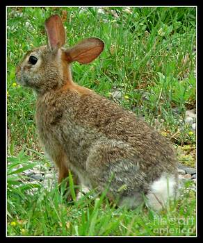 Gail Matthews - Rabbit Posing so Cute