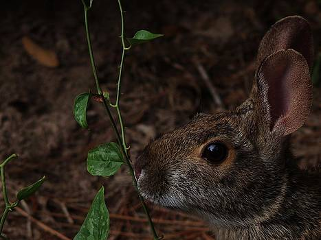 Rabbit Sniffing A Vine by Billy  Griffis Jr