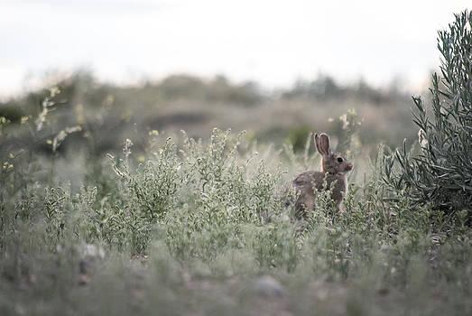 Rabbit by Stephanie Thomson