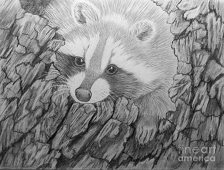 Raccoon 2 by Peggy Miller