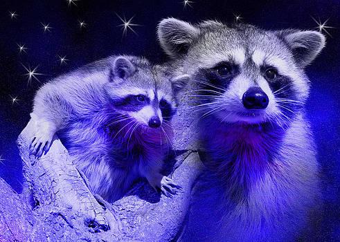 Jeanette K - Raccoon Dream2