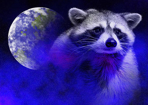 Jeanette K - Raccoon Dream5
