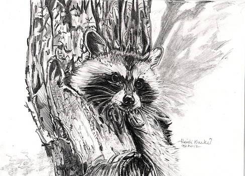 Raccoon in Tree by Heidi Kunkel