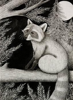 Jeanette K - Raccoon