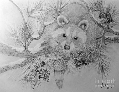 Peggy Miller - Raccoon