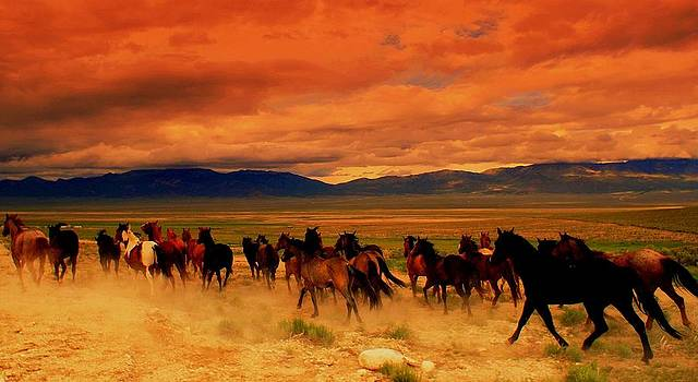 Race Across The Desert  by Jeanne  Bencich-Nations