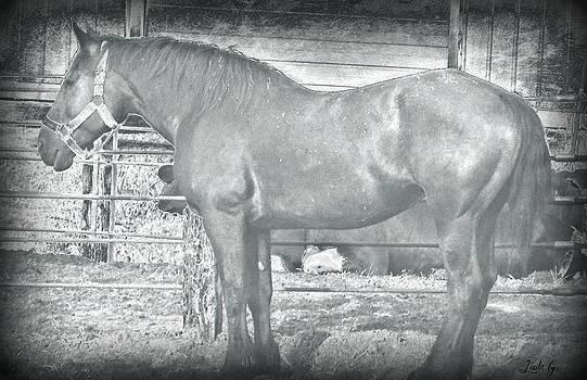 Linda Gonzalez - Race Horse Contender