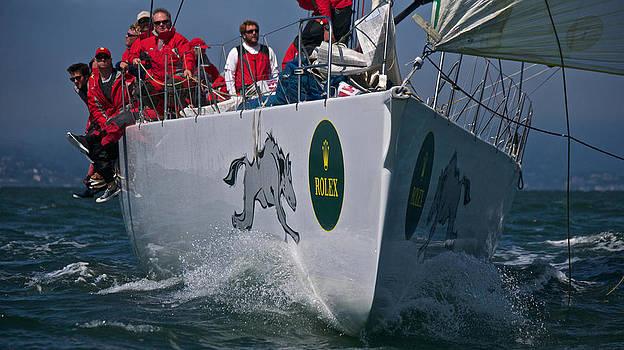 Steven Lapkin - Racing Down the Bay
