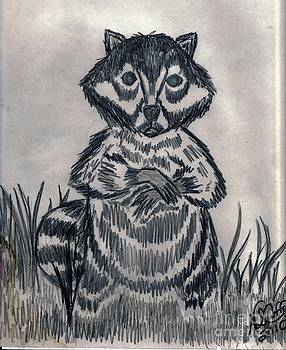 Racoon by Neil Stuart Coffey