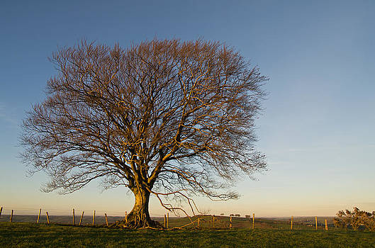 Raddon Hill Top Tree by Pete Hemington