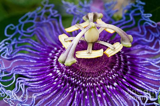 Michelle Wiarda-Constantine - Radiant Passiflora