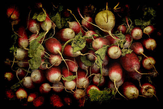 Flemish Radish Art by Jennifer Wright