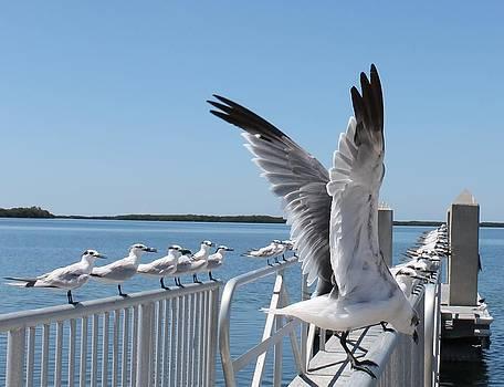Patricia Twardzik - Railing of Seagulls