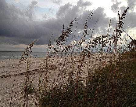 Rain and Sea Oats by Rosie Brown