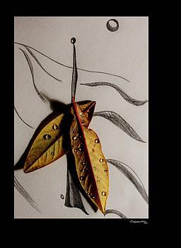Rain Catcher by Xoanxo Cespon