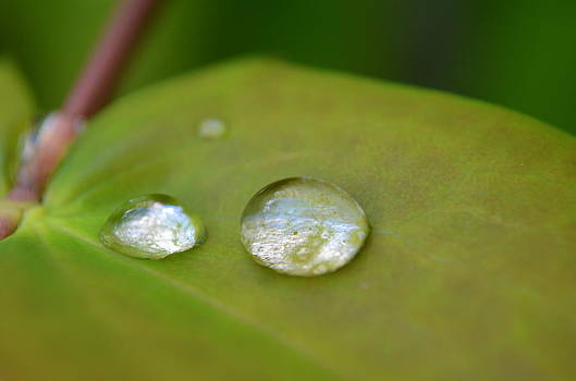 Rain Diamonds On A Leaf by Riad Belhimer